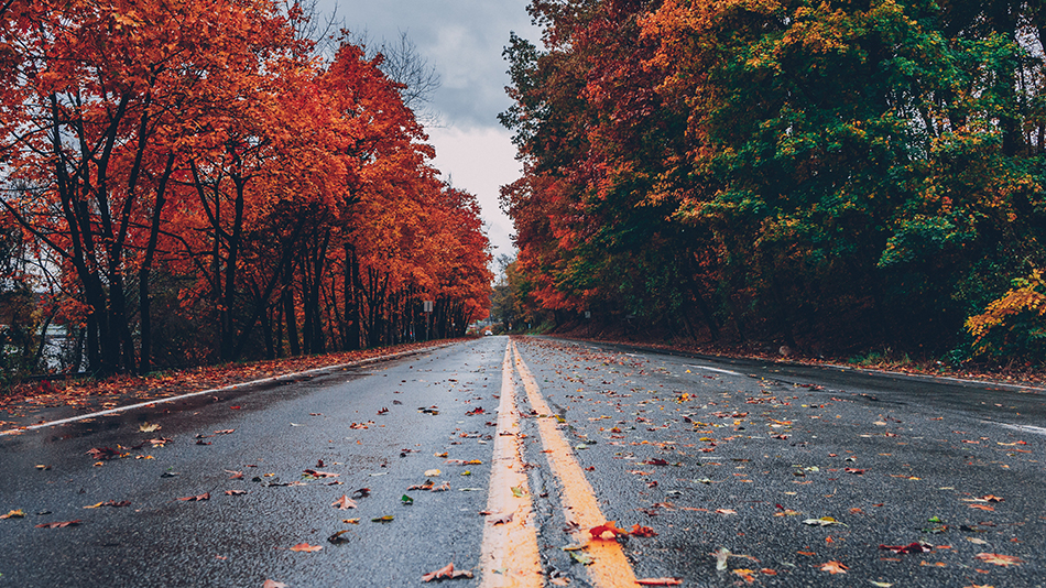 Local tips to seeing the Muskoka fall colours