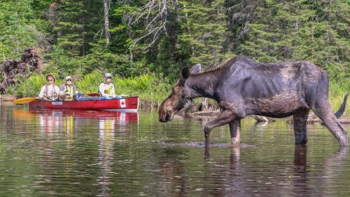 #1 ranked outdoor activity in Algonquin Park on TripAdvisor