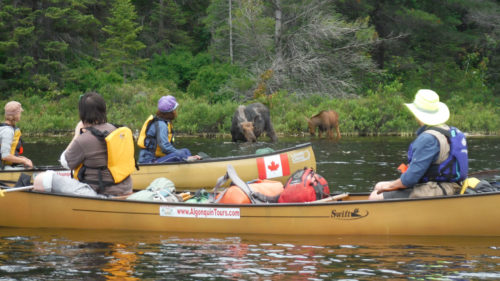 Get Intimate with Nature in Algonquin Park