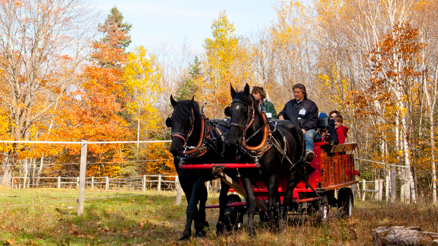Autumn Horse And Wagon Rides At Back Of Beyond Equine Centre Muskoka Tourism