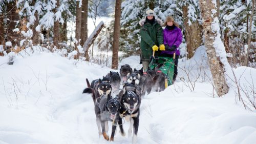 Dog Sledding Through The Wintry Muskoka Forest