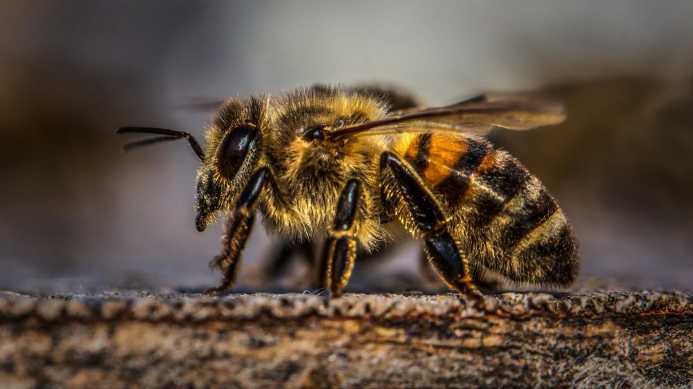Honey Bee Festival-Township of Georgian Bay