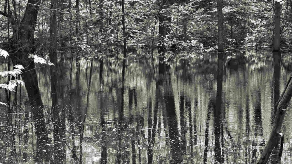Pond: A series of images created over time of one wetland in Muskoka by Jane Croteau