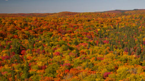 Fall Colours have ARRIVED in Muskoka