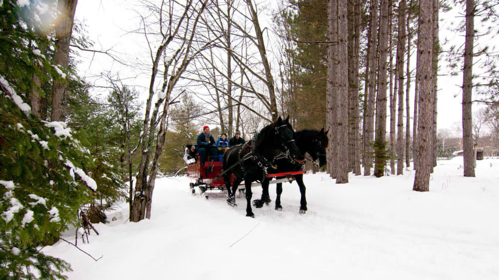 Take a Magical Sleigh Ride Through a Winter Wonderland