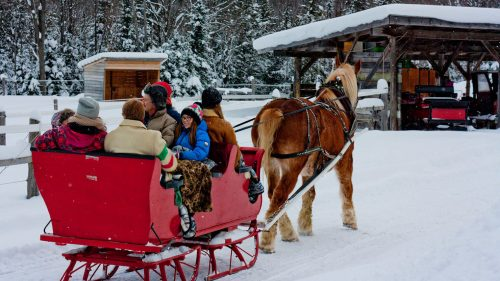 Dash Through Muskoka's Snowy Woodland Forest in a One-Horse Open Sleigh