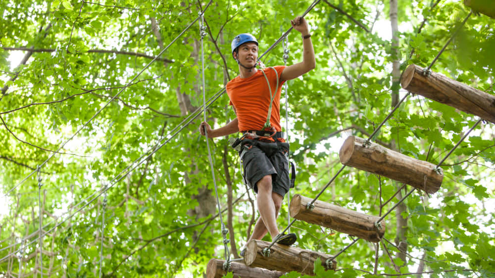 Zip, Swing Glide and Trek through the forest Canopy